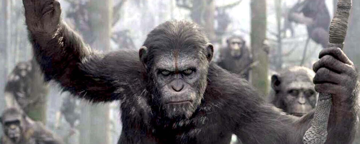 banner apes