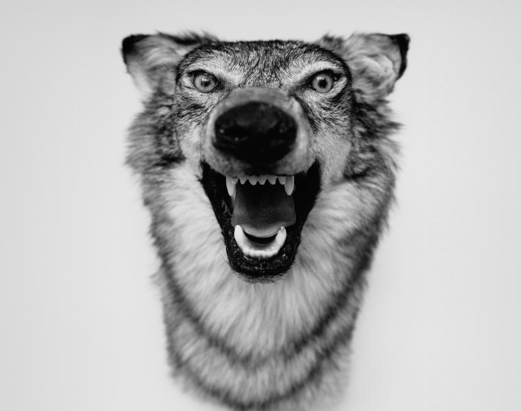 Mini Music Review : Yelawolf – Love Story (Shady/Interscope)
