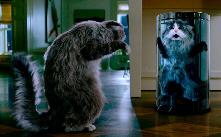MOVIE MINI REVIEW : critique de Ma vie de chat