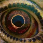 #Critique Voyage of Time de Terrence Malick