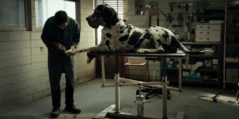 Dogman : Ma vie de chien
