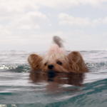 En eaux troubles : quand Hollywood coule à pic