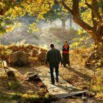 Le Poirier sauvage : les racines de la beauté